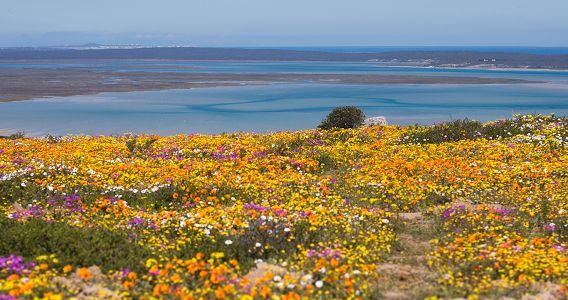 The West Coast National Park for seabirds by the thousand, spring flowers by the million, a few hundred antelope, and a sun-lit lagoon.
