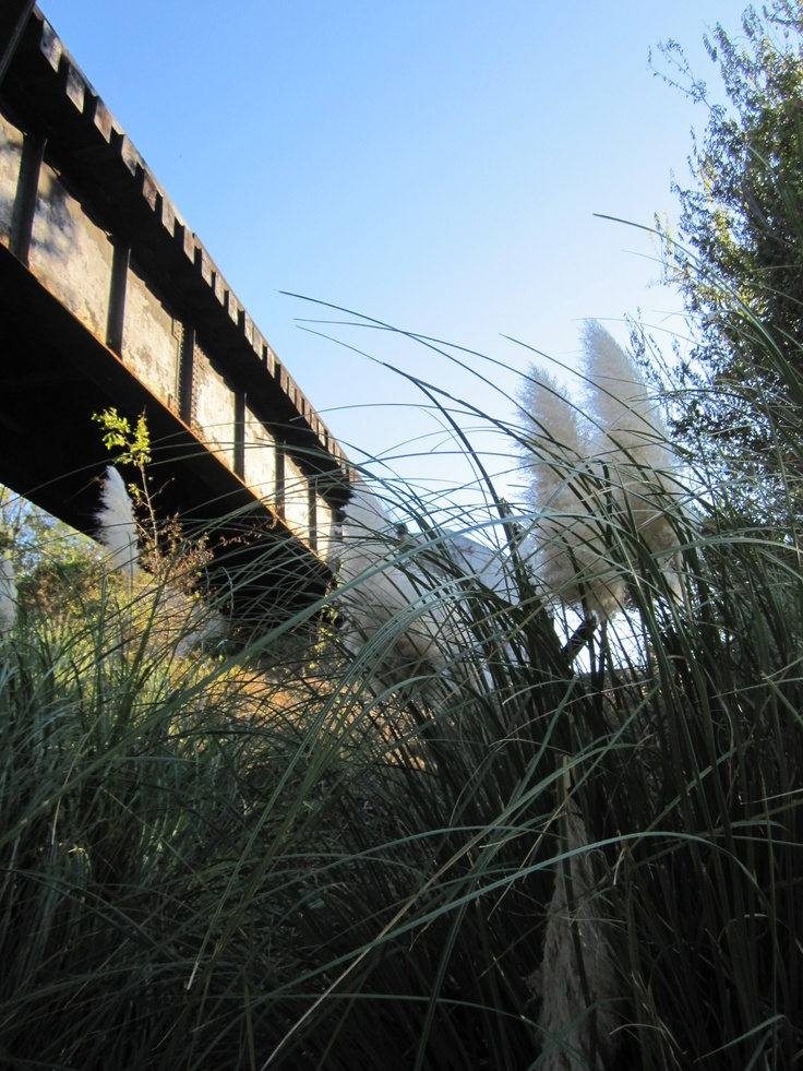 Train trestle, Macon, GA.