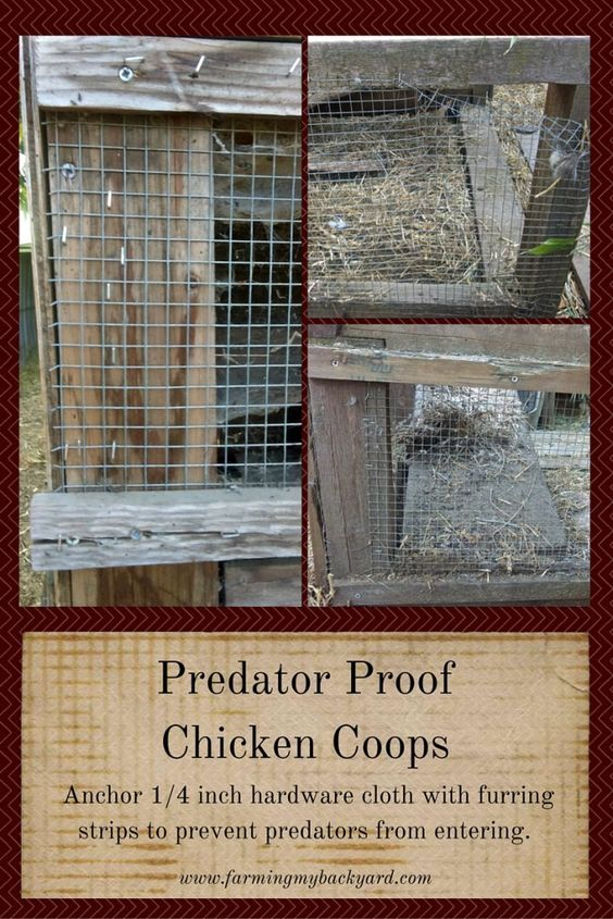 2081 Best Homestead Chickens Images On Pinterest Chicken Coops Farm Animals And Raising Chickens