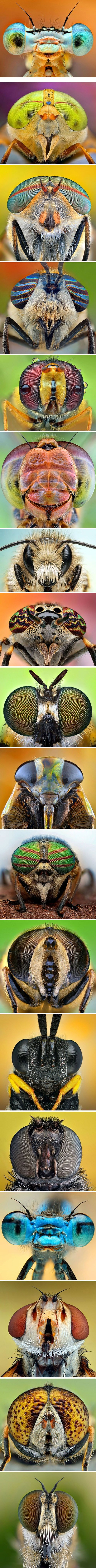 The amazing eyes of dragonflies, bees and flies in macro by Ireneusz Irass Walędzik (Poland, b.1984)