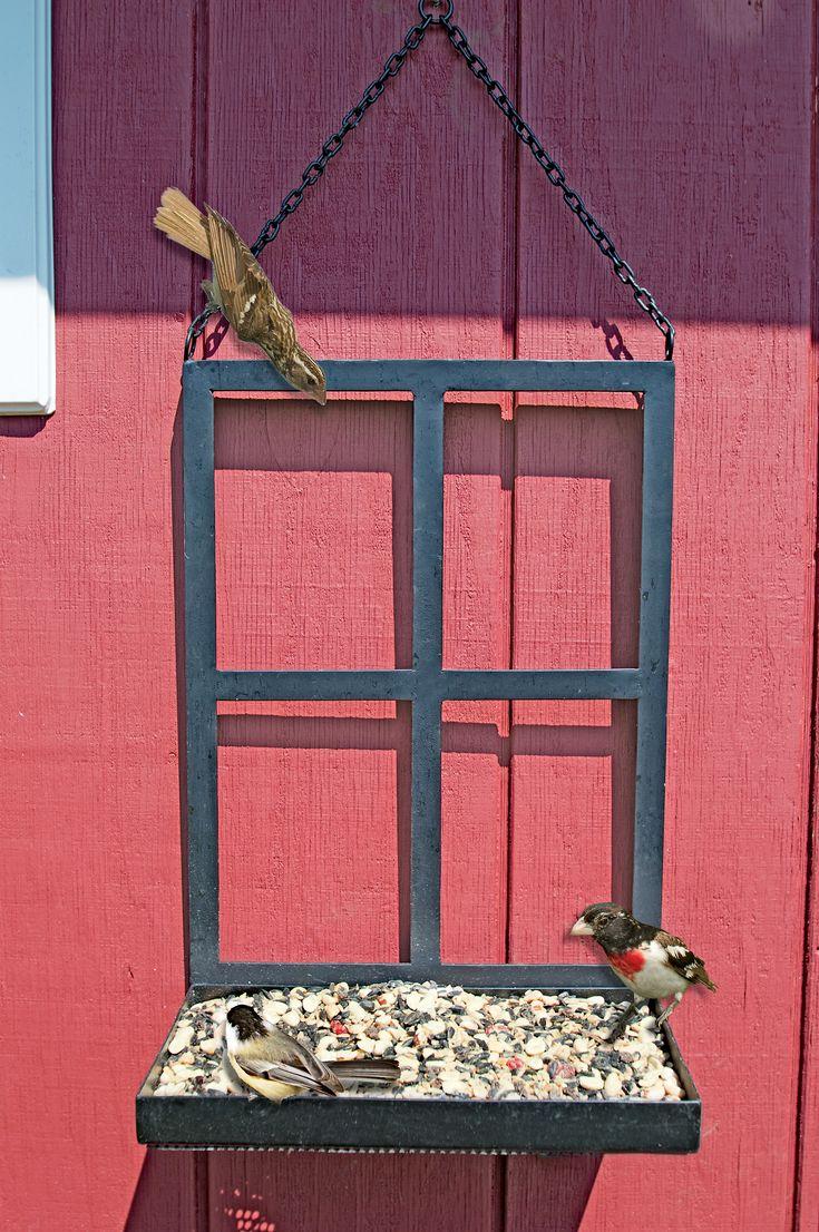 Platform Bird Feeder Attracts More Birds