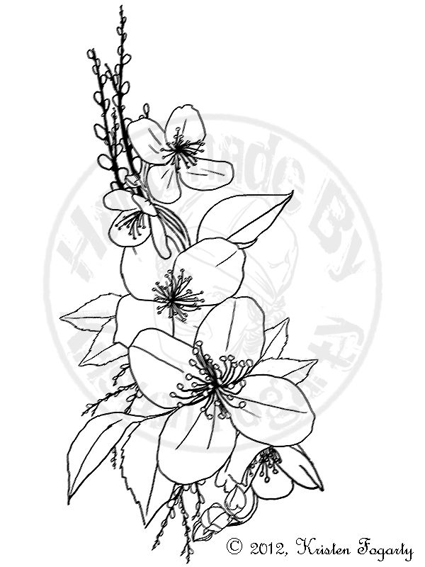 Line Drawing Jasmine Flower : Drawings of jasmine flower pixshark images
