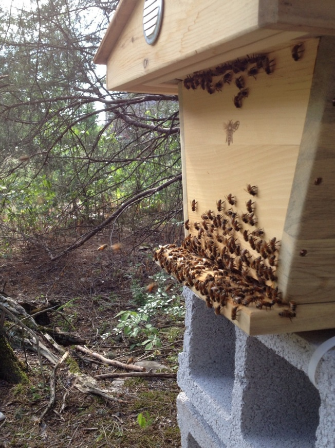 Top Bar Hive, Honey Bees