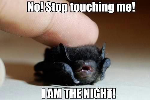 I am the night... baby bat :D