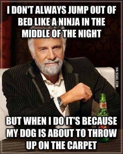 I don't always jump out of bed like a ninja in the middle of the night, but when I do, it's because my dog is about to throw up on the carpet!