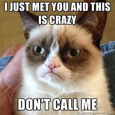 I simply cannot get over this grumpy cat. Too funny!