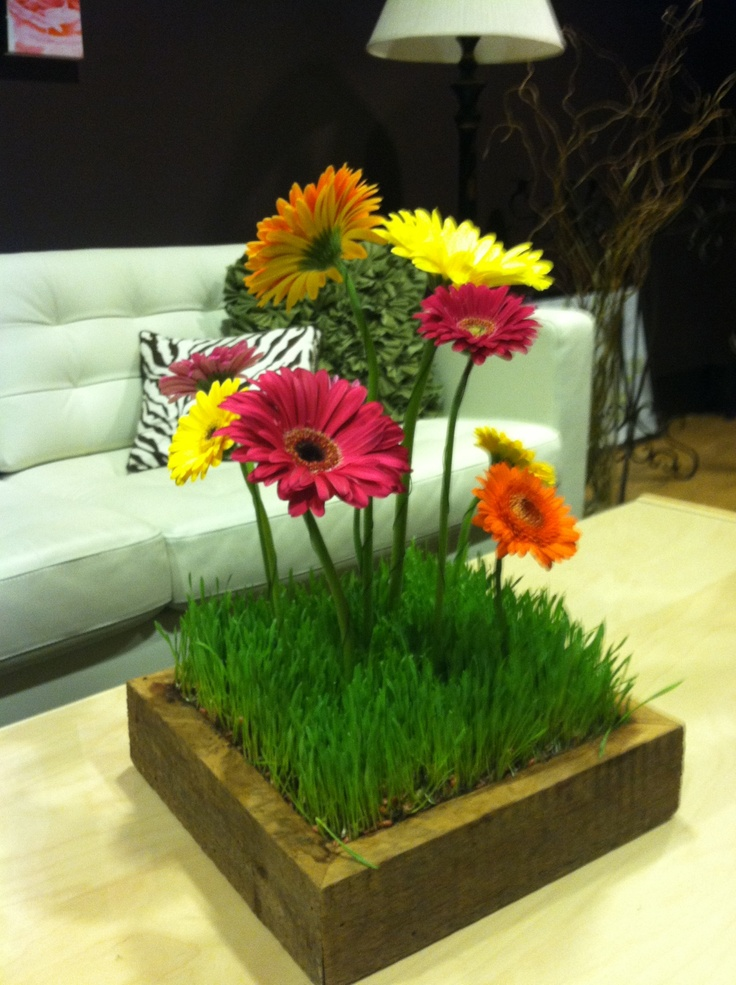 Gerbera Daisy and Wheat Grass centerpiece in a Barn Box for a Bat Mitzvah!
