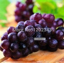 50 unids Superior púrpura grande de semillas de uva deliciosa sabor fácil cultivo de semilla de fruta de alto nivel patio plantas semillas de árboles(China (Mainland))
