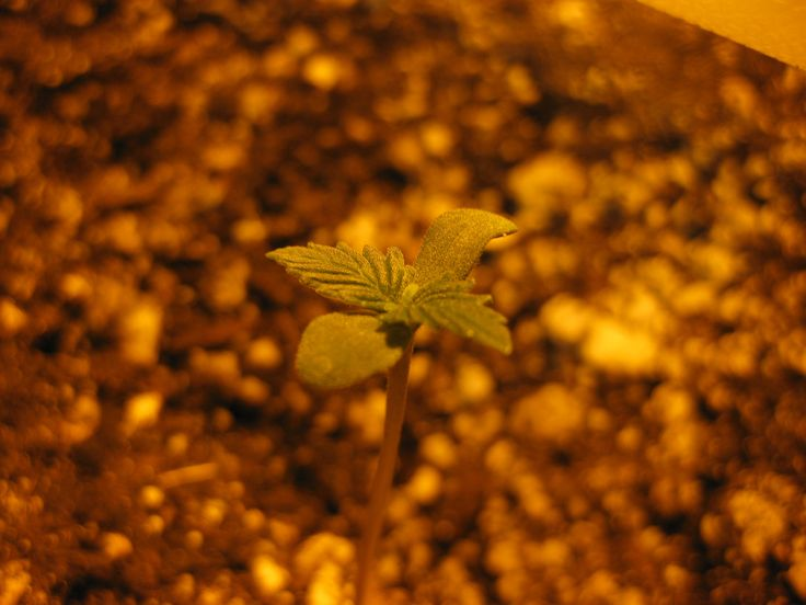 AK sprouting strong!