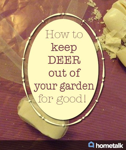 One Womanu0027s Natural Trick For Keeping Deer Out Of Her Garden!