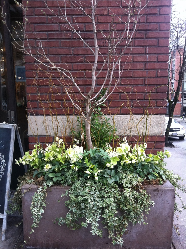 A wonderful example of an outdoor green arrangement that signals sunny days ahead...The Cross-Vancouver BC