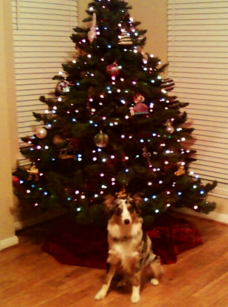 161 Best Christmas Puppies Images On Pinterest Puppy