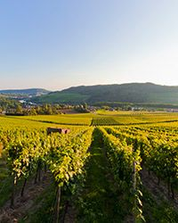 World's Best Riesling Wine Regions on Food & Wine