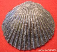 blog paleontologico de carolina: LA HISTORIA DEL PICO FRENTES, SORIA.
