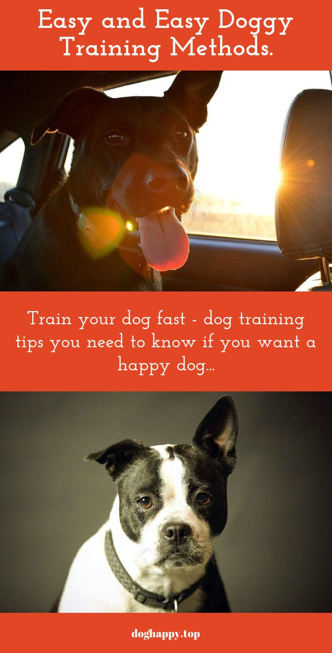Make Training Sessions Enjoyable For Your Doggy As Well As You