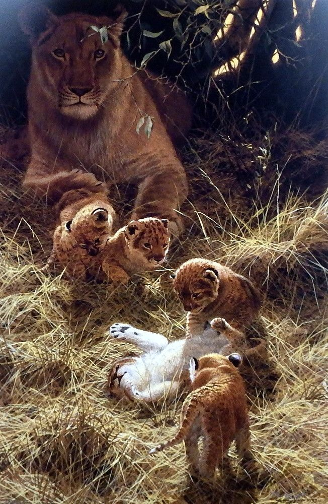 A mother lion takes cover from the hot sun as she watches her cubs roll around on the ground with each other in John Seerey-Lester's BILASHSKA PLAYTIME. This print is signed and numbered and is availa