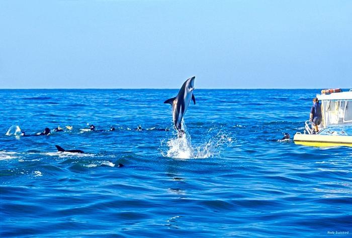 Swimming with dusky dolphins, Kaikoura