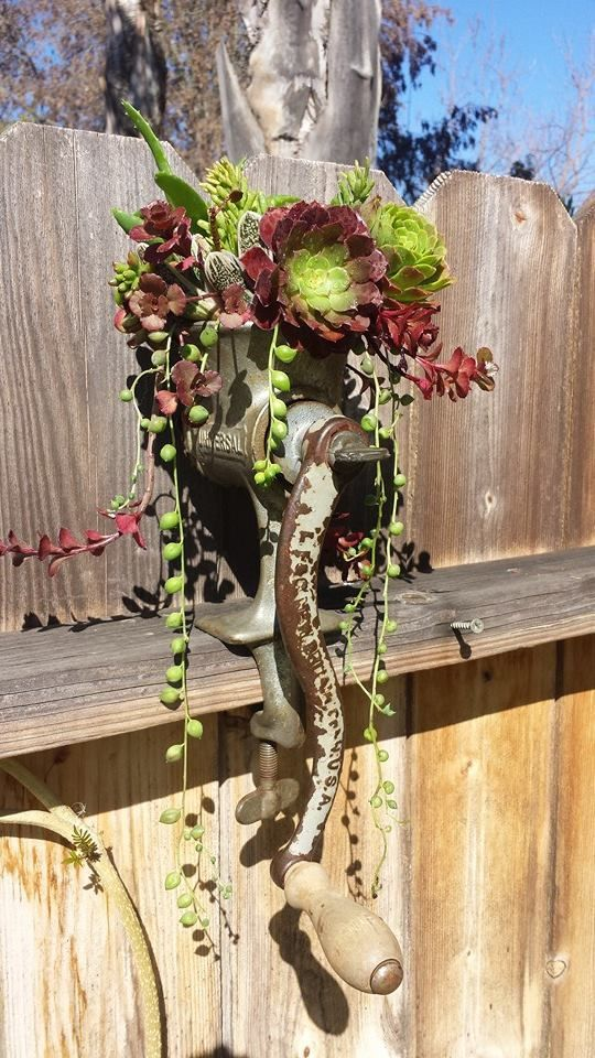 Meat Grinder with Succulents...need one of these. via   Nature Containers Vintage Garden Art:
