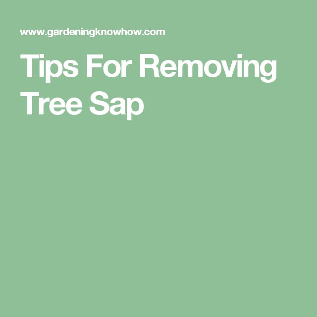 Tips For Removing Tree Sap