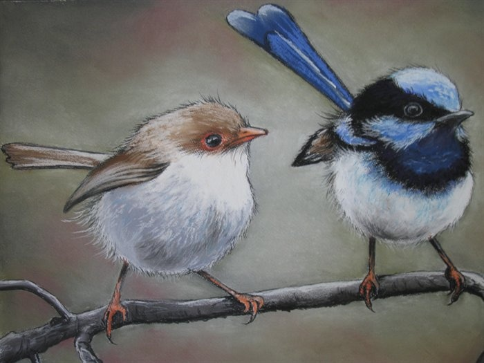 Superb Fairy Wrens by Sally Ford