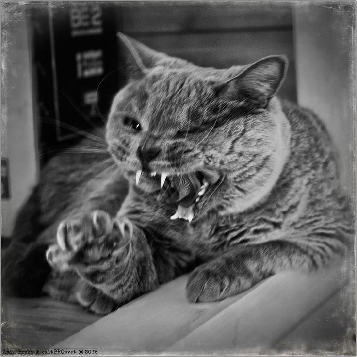 photo: Do not Wake a Sleeping Cat | photographer: Andy Prokh | WWW.PHOTODOM.COM