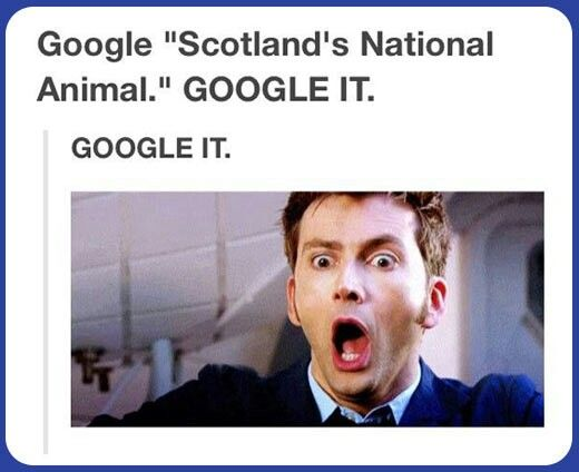 Scotland's National Animal. This Can't Be Real! TOO AWESOME!!! TO GREAT FUN FACT! ;D