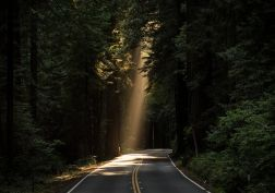 conifer daylight evergreen forest highway landscape light light and shadow nature outdoors paved road road scenery scenic sequoia sunrays travel trees woods wallpaper