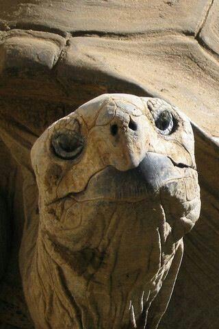 677 best images about schildkröte auf pinterest | lustige schildkröte, wasserschildkröten und