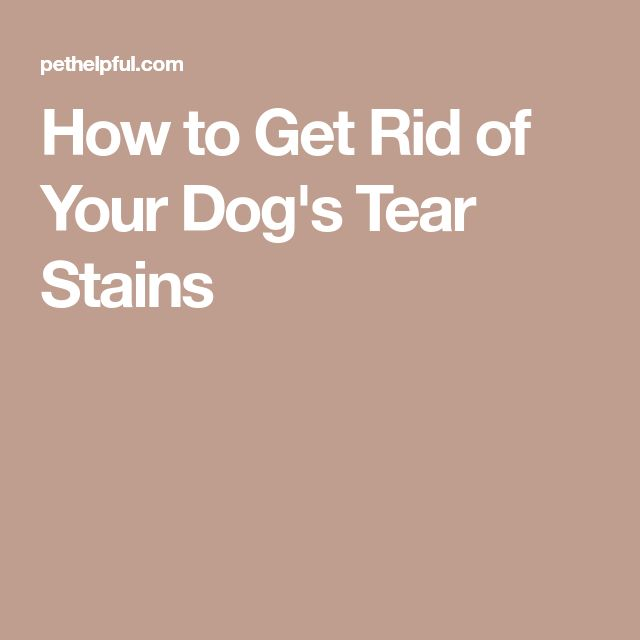 How to Get Rid of Your Dog's Tear Stains