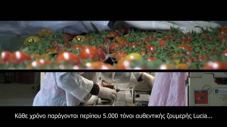Agritex Energy SA, the 10ha house of Lucia tomato