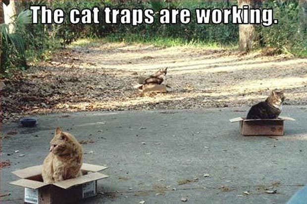 cat traps family | Login | Join