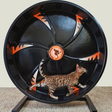 Made of recycled plastic with a sturdy metal stand, the hamster-wheel-like drum gives inquisitive cats the opportunity to enjoy exercise.