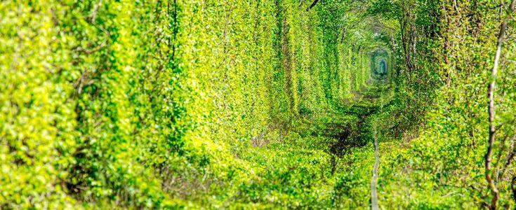 10 túneles de árboles tan bonitos que no te parecerán de este mundo