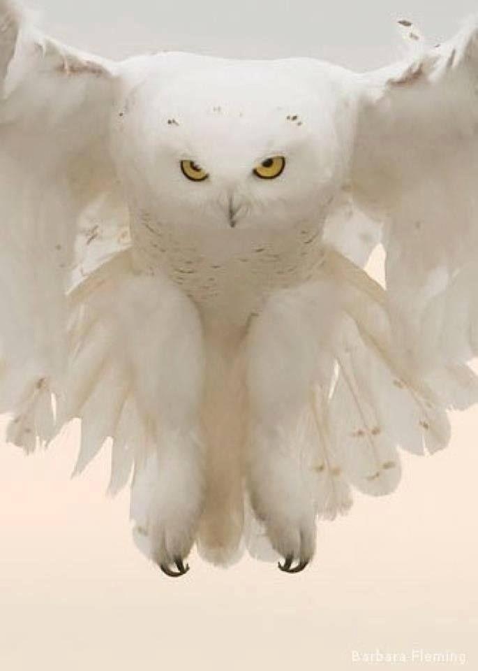 285 mejores imágenes de Birds en Pinterest   Aves, Búhos y Las aves