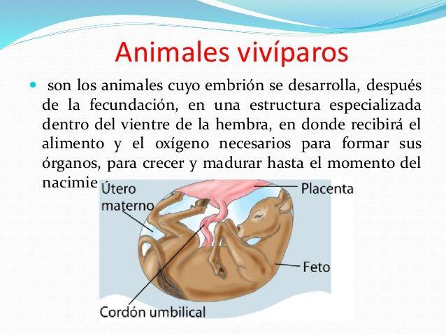 Resultado De Imagen Para Desarrollo Embrionario En Los Animales Oviparos Animales Oviparos Animales Viviparos Ciclo Celular