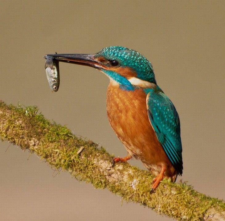 20 Pássaros de Espetaculares Cores!                                                                                                                                                                                 Mais