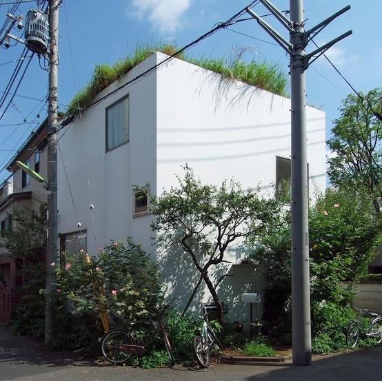 house in a plum grove SANAA