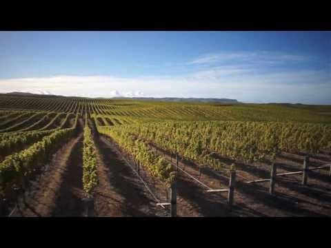 The Yealands Family Wines Story