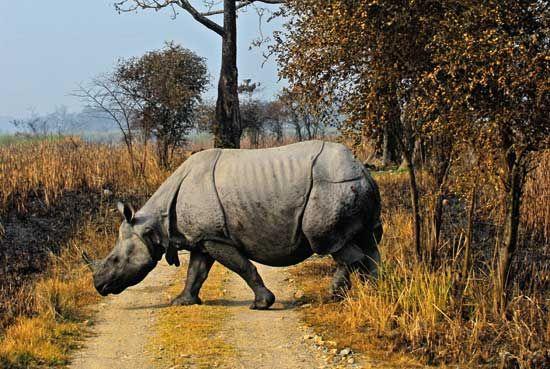 Kaziranga National Park- Assam   <3