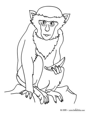 Monkey Coloring Page More Jungle Animals Pages On Hellokids
