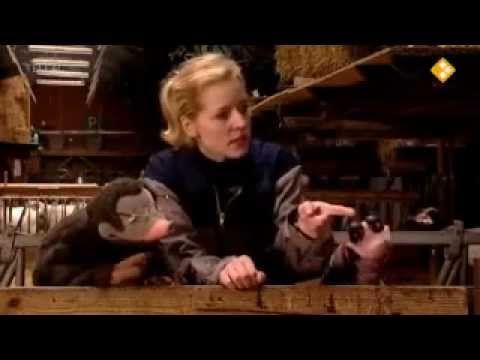 ▶ koekeloere: meh (thema dieren/boerderij/lente) - YouTube