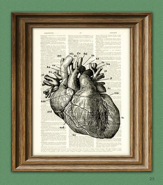 It's a HUMAN HEART diagram beautifully upcycled dictionary page book art print.   -  Best Valentine ever?