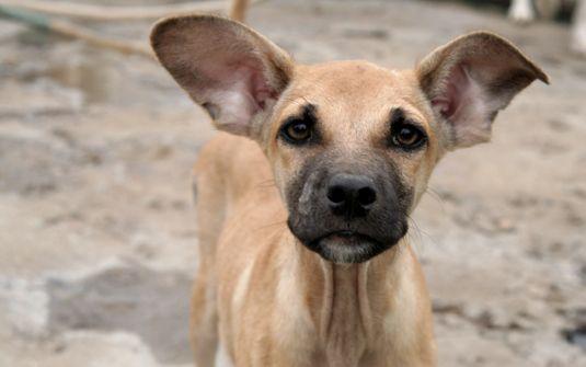 5 curiosidades sobre os cães vira-lata