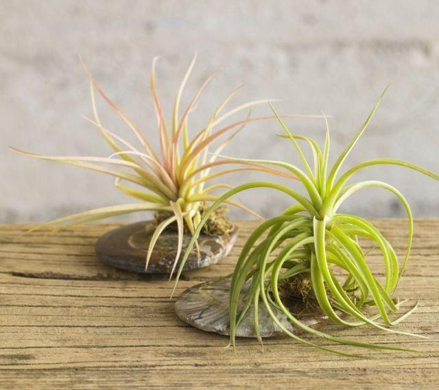 Die 25+ Besten Ideen Zu Orchideen Richtig Pflegen Auf Pinterest ... Oleander Als Zimmerpflanze Richtig Pflegen