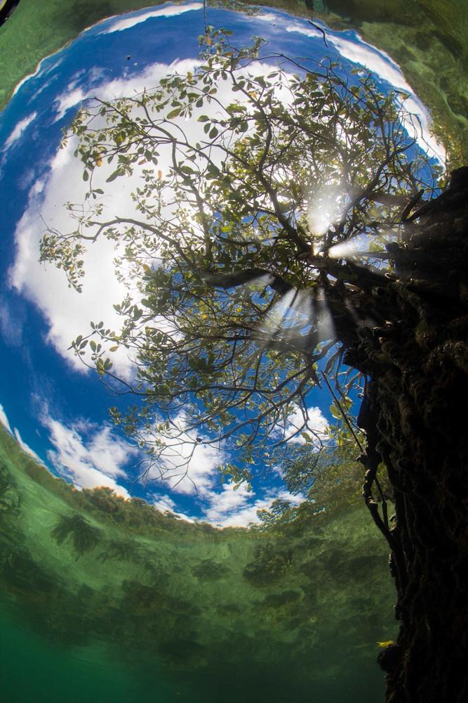 FOTO Cea mai frumoasă fotografie subacvatică a anului