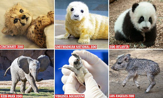 Zoos enter Twitter battle with their cutest animal snaps