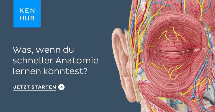 Die menschliche Anatomie online lernen. Perfekt vorbereitet für Studium, Ausbildung, Beruf oder Weiterbildung. Jetzt kostenlos und unverbindlich testen.