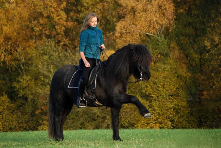 Abstimmung zur Wahl Miss Reitforum 2009 der Ponys/Kleinpferde