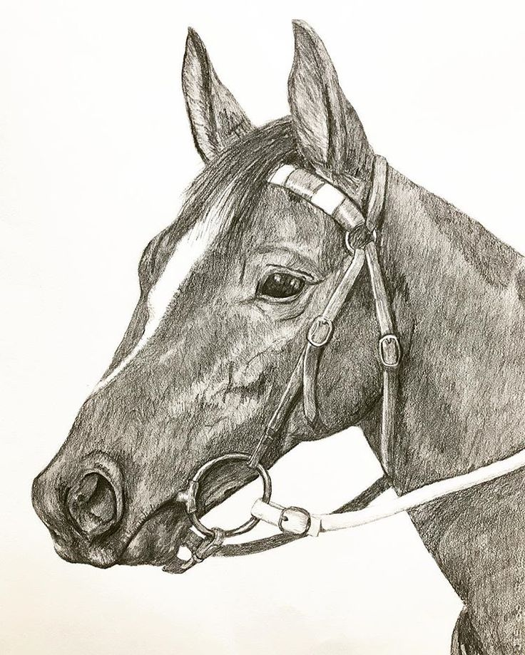 A graphite drawing back from the week of horses! It seemed funny that horse inspired artworks were all walking out the door the week of their birthday! 🐎🐎🐴#equineart #graphitedrawing #pencildrawing #commissionartwork #originalart #artgallery #theyard #theyardstudio #artforsale #visitjugiong #stopinjugiong
