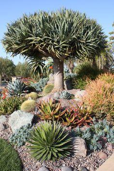 arid coastal rock garden designs - Google Search